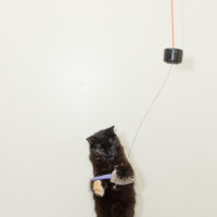 String Up a Simple, Chaotic Double Pendulum Cat Toy