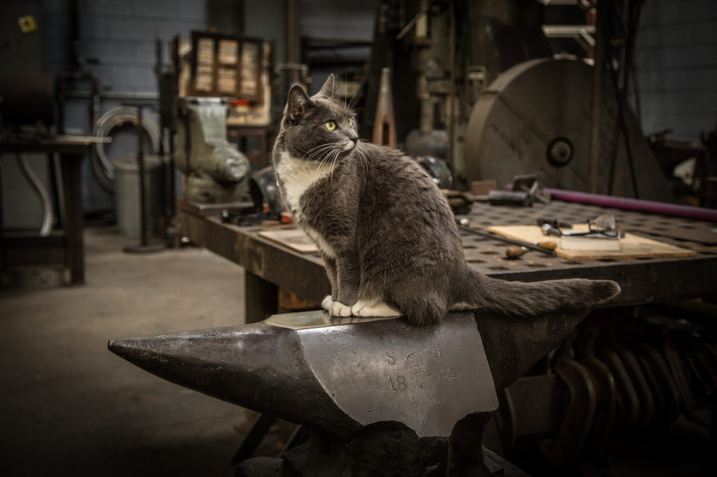 A cat sits proudly on an anvil