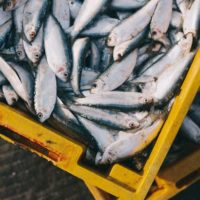 Edible Innovation: Re-Making the Future of Fishmeal